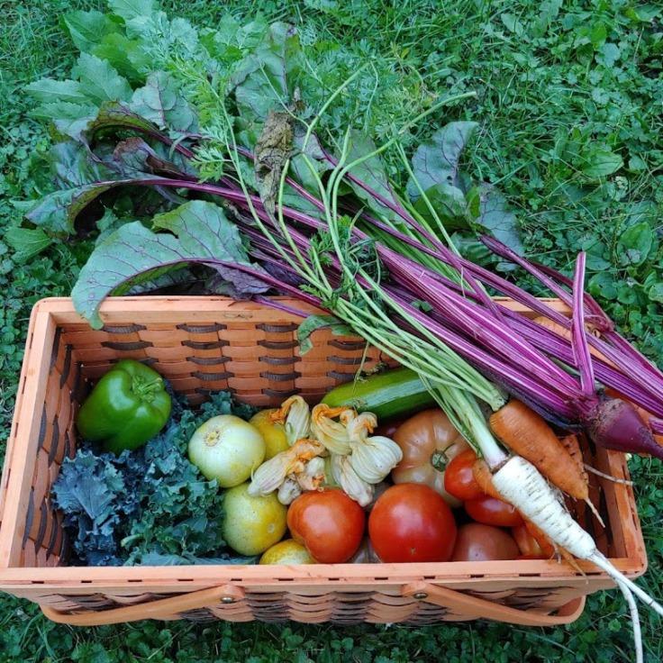Backyard Garden Harvest