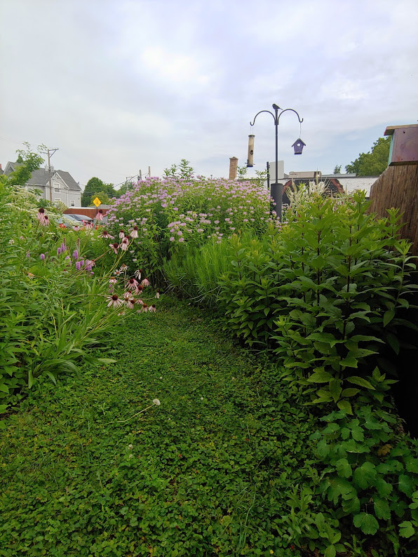 Front Yard Pollinator Garden in Old Irving Park designed by Wild World Gardens